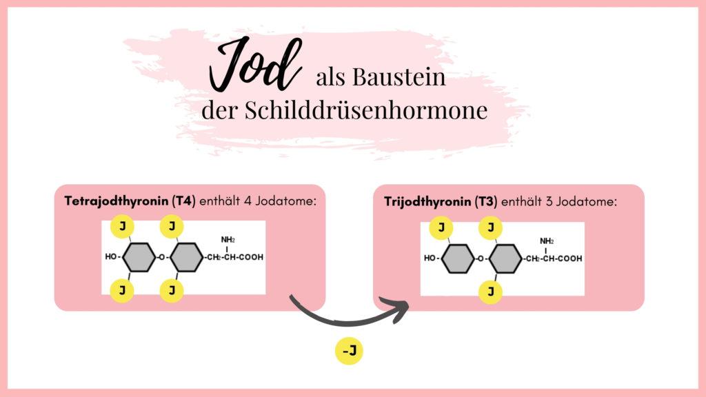 Jod, Schilddrüsenhormone, T4, T3, Hashimoto